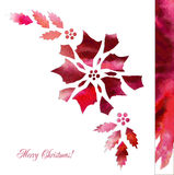 Background  with red poinsettia flowers Stock Photos