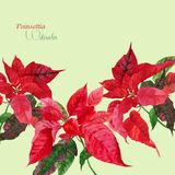 Background  with red poinsettia_3-04 Stock Photos