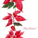 Background  with red poinsettia-09 Stock Image