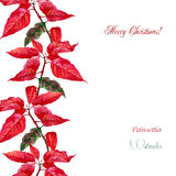 Background  with red poinsettia Stock Photography