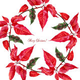 Background  with red poinsettia Royalty Free Stock Images