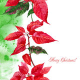 Background  with red poinsettia-09 Stock Photo