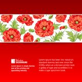 Background with red poppies. Stock Photos