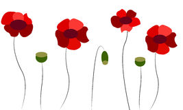 Background with red poppies Royalty Free Stock Images