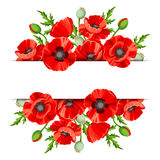 Background with red poppies. Vector illustration. Stock Image