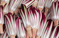 Background of red radicchio havested in the Po Valley in Italy Royalty Free Stock Photography