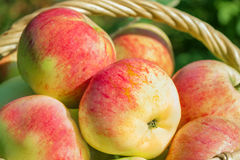 Background from red ripe juicy apples Stock Image