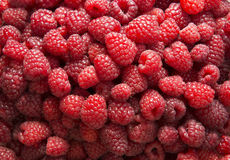 Background of red ripe raspberries. Royalty Free Stock Photography
