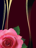 Background with red rose. Royalty Free Stock Images