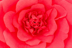 Background red rose Stock Images
