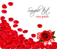 Background of red rose petals. Vector Royalty Free Stock Photos