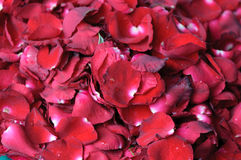 Background of red rose petals Stock Photography