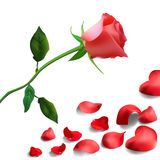 Background of red rose petals with flower Stock Photography