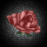 Background with a red rose Royalty Free Stock Photos