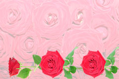 Background from red roses. Royalty Free Stock Photography