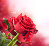 Background with red roses Stock Images