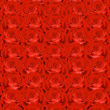 Background with red roses Royalty Free Stock Photo