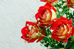 Background from red roses Royalty Free Stock Images