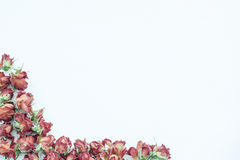 Background with red roses isolated on white with sample text Royalty Free Stock Image