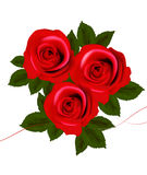 Background with red roses. Vector. Illustration Stock Images