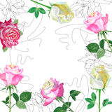Background with red roses1-02 Stock Photography