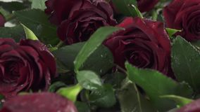 Background of red roses with water drops slow motion stock footage video stock footage
