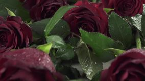 Background of red roses with water drops slow motion stock footage video. Background of the red roses with water drops slow motion stock footage video stock video footage