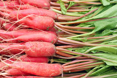 Summer radish Stock Photos