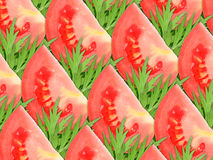 Background of red tomatoes and green leaf Royalty Free Stock Image