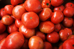 Background of red tomatoes Royalty Free Stock Images