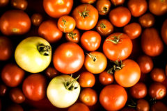 Background of red tomatoes and two green Royalty Free Stock Photos