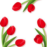 Background with red tulips. Stock Photos