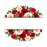 Background with red and white roses. Vector eps-10. Royalty Free Stock Image