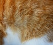 Background of red wool cat. Royalty Free Stock Photos