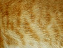 Background of red wool cat. Stock Photos