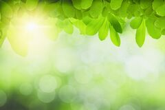 Free Background Relaxation And Natural Healing Concept ,close Up Light Green Leaves And Sunlight,blurred Background,beautiful Fresh Stock Photos - 174299183
