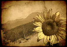 Background - retro poster with sunflower Stock Image