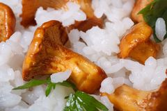 Background of rice with mushrooms chanterelles and parsley Stock Image