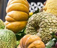 Background of ripe big pumpkins. On market shelves Stock Photo