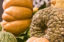 Background of ripe big pumpkins. On market shelves Royalty Free Stock Image
