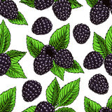Background with ripe bramble Stock Photo