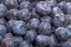 Background of ripe great bilberry Stock Photo