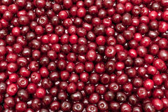 Background of ripe juicy cherries Royalty Free Stock Photos