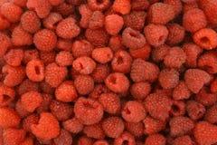 Background of ripe raspberries. Background full of delicious raspberries Stock Photos