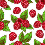 Background with ripe raspberries. Cute seamless background with ripe raspberries and leaves. hand-drawn illustration Royalty Free Stock Image
