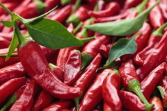 Red chili peppers. Background of ripe red chili peppers with leaves Stock Photography
