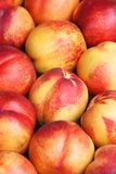 Background of ripe red nectarines closeup Royalty Free Stock Photo