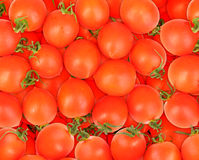 Background of ripe red tomatos Stock Photography