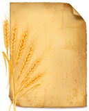 Background with ripe yellow wheat ears. Agricultural vector illustration Royalty Free Stock Image