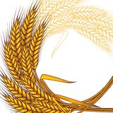 Background with ripe yellow wheat ears Royalty Free Stock Photo